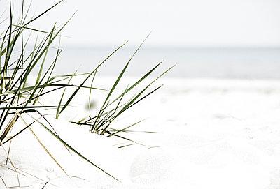 Strandgras am Strand von Dueodde - p1162m1461815 von Ralf Wilken