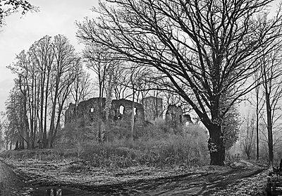 Eiche vor Ruine Spilberg bei Langenstein, Oberösterreich - p1463m2191671 von Wolfgang Simlinger