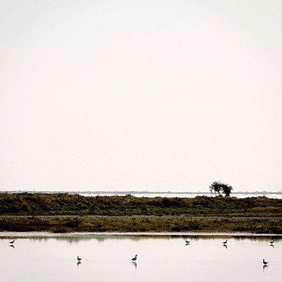 Birds in flat water - p5679615 by Claire Dorn