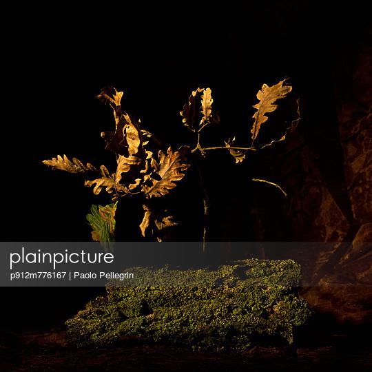 p912m776167 von Paolo Pellegrin