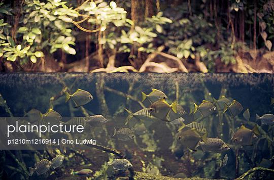 Fische im Wasser - p1210m1216914 von Ono Ludwig