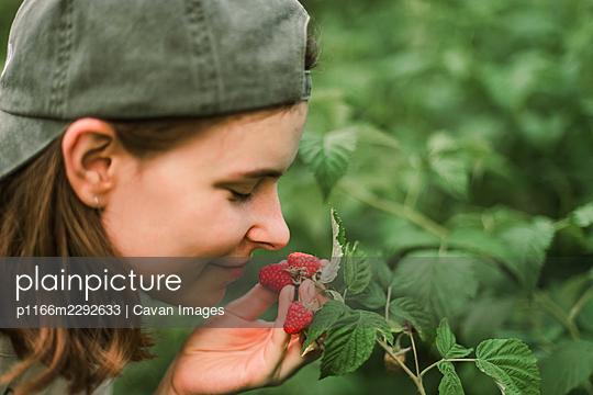 Hand picked freshly raspberries in garden - p1166m2292633 by Cavan Images