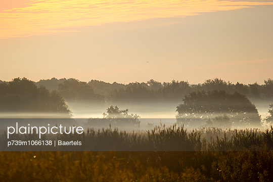Morningdust - p739m1066138 by Baertels