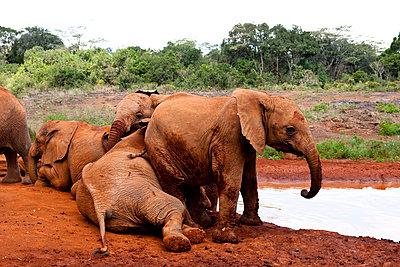 Nairobi Nationalpark - p5330404 von Böhm Monika