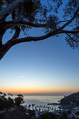 Tree over harbor at sunset - p555m1305242 by Steve Smith
