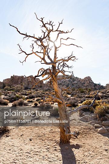 Palm Springs - p756m1158701 von Bénédicte Lassalle