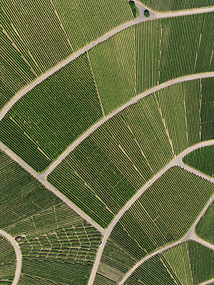 View from above textured green crops - p301m2016401 by Stephan Zirwes