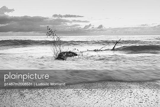Abandoned tree - p1487m2008531 by Ludovic Mornand
