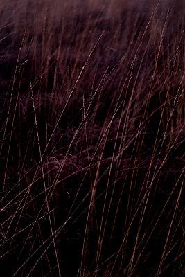 Surreale Landschaft - p989m1193781 von Gine Seitz