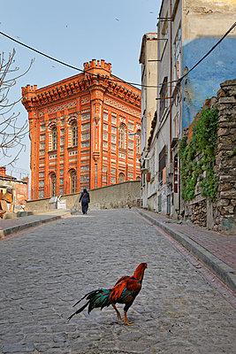 Turkey, Istanbul, Fatih, Phanar Greek Orthodox College - p300m930137f by Martin Siepmann