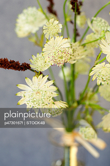 Close-up of white flowers - p4730167f by Stock4B