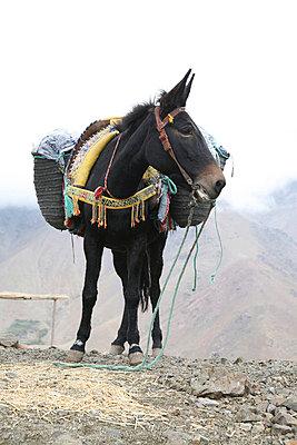 Donkey - p3170209 by Nina Steul