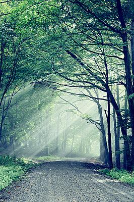 Sonnenstrahlen im Nebelwald - p992m1069586 von Carmen Spitznagel