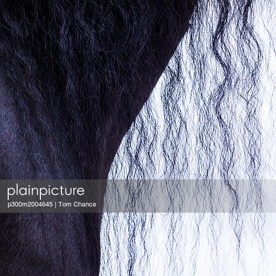Detail of frisian horse, horse's mane - p300m2004645 von Tom Chance