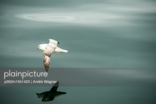 Möve im Flug - p362m1541423 von André Wagner