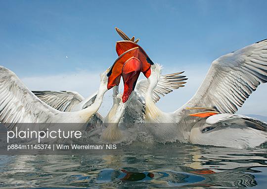 p884m1145374 von Wim Werrelman/ NIS