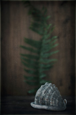 Shell and fern leaf still life - p1047m1502575 by Sally Mundy
