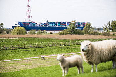Schafe am Deich - p1076m1016340 von TOBSN
