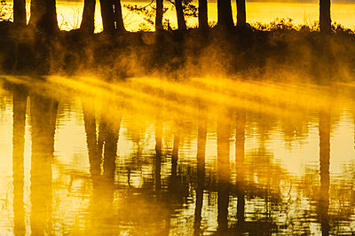 Trees reflecting in water - p312m1104026f by Mikael Svensson