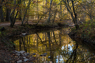 Canal in the woods. - p1072m874839 by Dan Chung