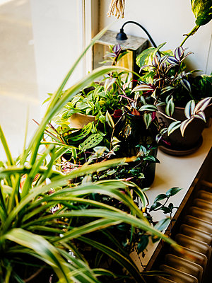 Indoor plants - p1177m2076544 by Philip Frowein