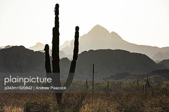 p343m1520842 von Andrew Peacock