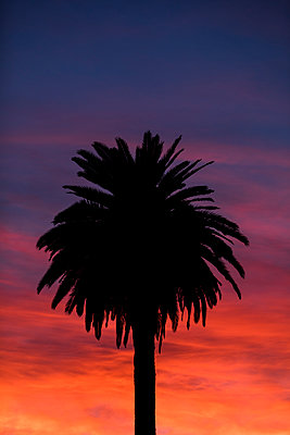 Palm tree in sunset - p1094m2057255 by Patrick Strattner