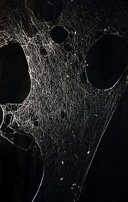 Cobweb - p971m1146691 by Reilika Landen