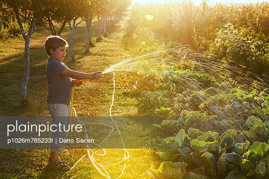 Boy Watering Garden - p1026m785233f by Dario Secen