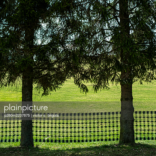Transparent snow fence on the edge of a meadow - p280m2237875 by victor s. brigola