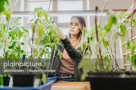 Woman checking on her tomato plants under growing lights indoors, Viersen, NRW, Germany - p300m2286847 von Mareen Fischinger