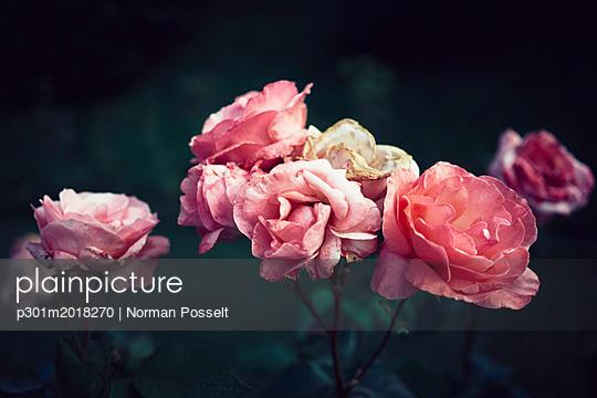 p301m2018270 von Norman Posselt