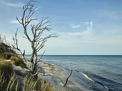 Vertrockneter Baum an der Küste - p1200m1131619 von Carsten Görling