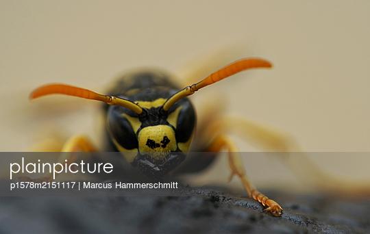 Warnfarben - p1578m2151117 von Marcus Hammerschmitt