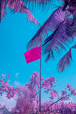 Infrared photography, Red flag under the palm trees  - p1487m2125530 by Ludovic Mornand