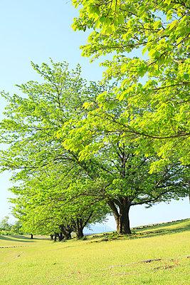 Yamanashi Prefecture; Japan - p307m963605f by SHOSEI
