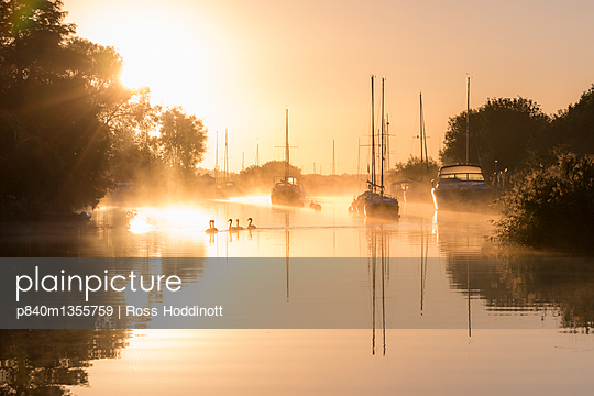 Wareham quay at sunrise, mist and family of mute swans, Dorset, UK. September . - p840m1355759 by Ross Hoddinott