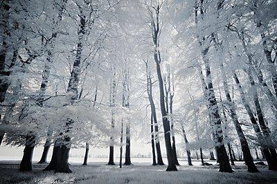 Spooky forest - p1137m932529 by Yann Grancher