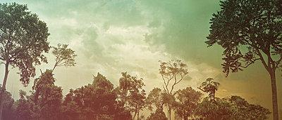 Deciduous trees - p1668m2288161 by daniel belet