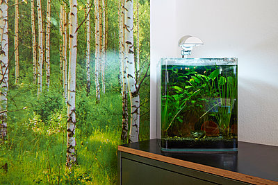 Aquarium - p1272m1148742 von Steffen Scheyhing