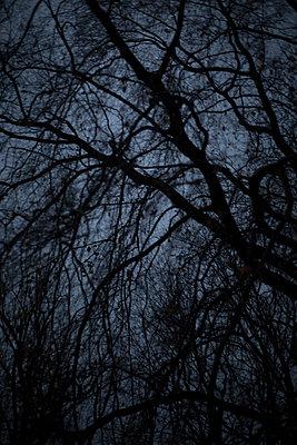 Netz aus Ästen und Zweigen  - p1325m1516469 von Antje Solveig