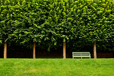 Park bench and deciduous trees - p851m2289582 by Lohfink