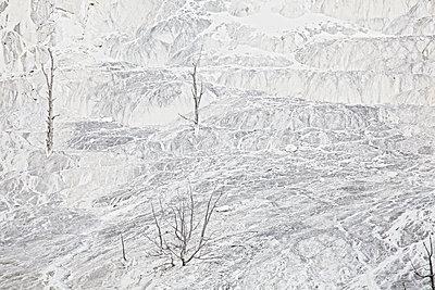 p1278m2204268 by Rüdiger J. Vogel