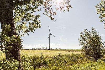 Windrad und Bäume - p893m2021687 von Thomas Ebert