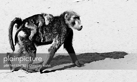 Affenmutter mit Baby - p887m1124782 von Christian Kuhn