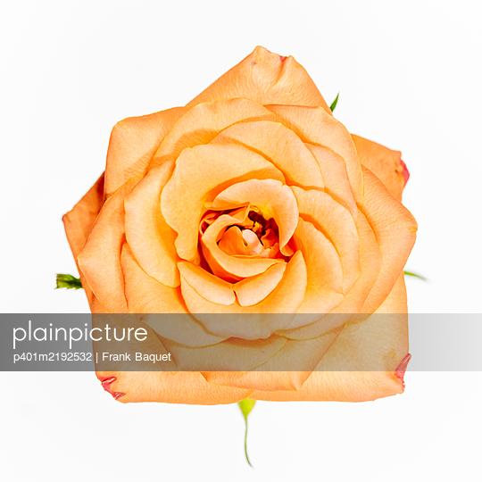 Rose - p401m2192532 von Frank Baquet