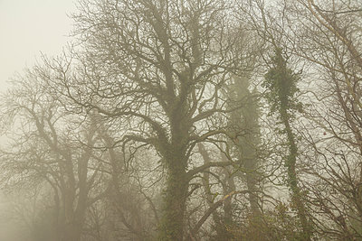 Scary Trees - p1488m1573590 by Sid Miller
