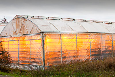 Greenhouses heated by geothermal heat near Geysir in Iceland - p343m2046954 by Ashley Cooper