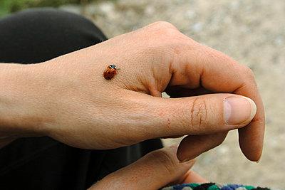 Marienkäfer auf der Hand - p4860085 von anneKathringreiner
