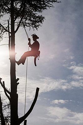 Man in a tree - p739m715429 by Baertels